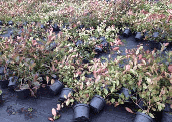 potted_plants_blown_over