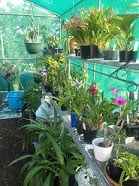 5 Common Mistakes To Avoid When Growing Your Orchids In Doors