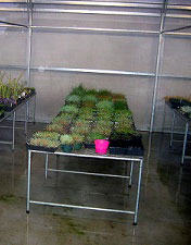 Greenhouse-Bench