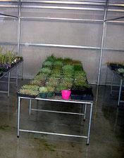 Greenhouse-Bench