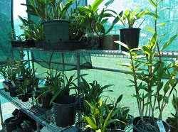 plants-in-shade-house
