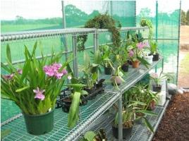 Orchids on 3 Tiered benching in shade house