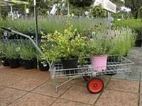 Retail nursery trolley (915 × 457mm)