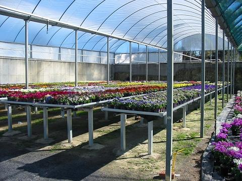 Heavy duty Rolling Benches for inside shade %26 glass houses