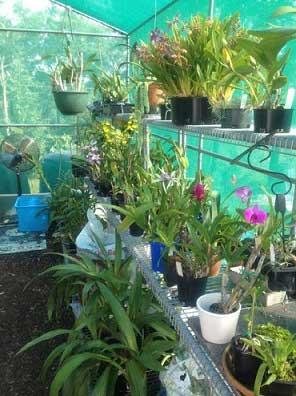 pretty_plants_under_shade_cloth