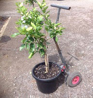 Hand-Trolley-with-Potted-Plant.jpg
