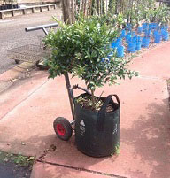 Hand-Trolley-with-Small-Trees.jpg